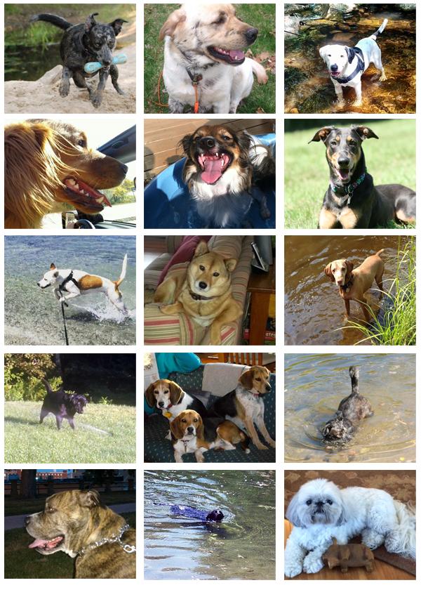 Secondwind Dogs