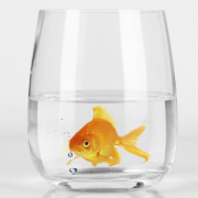 Fish swimming in cup