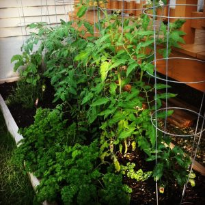 gardening tips from the secondwind team