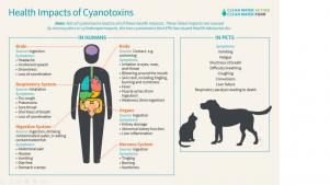 Cyanobacteria Health Issues
